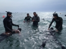 freediving-school008