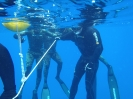 freediving-school016