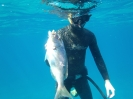 spearfishing0022